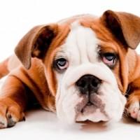 Restraining the Bulldog
